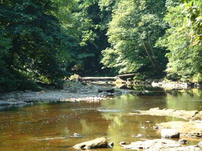 River Ure at Hackfall looking downstream