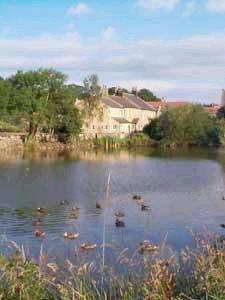 Village pond with ducks