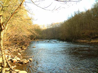 The River Ure Hackfall